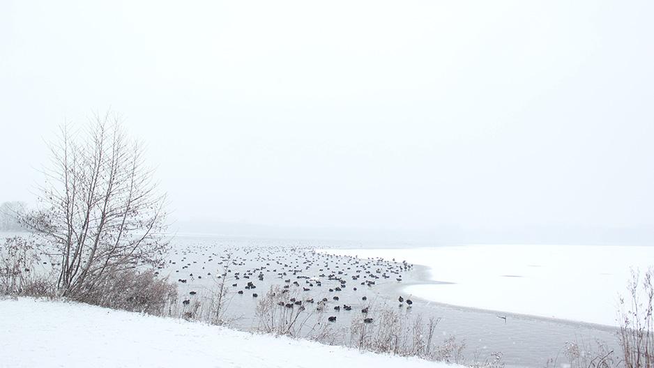 winter-arrangement